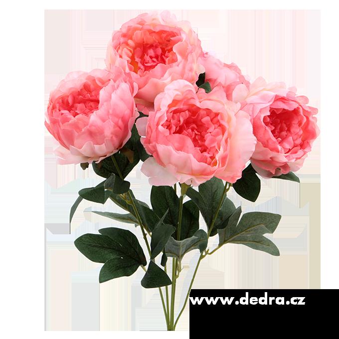 Dedra Pugét Pivoněk růžová výška 45 cm ateliérová květina