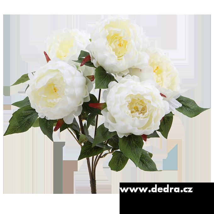 Dedra Pugét Pivoněk bíloá výška 45 cm ateliérová květina