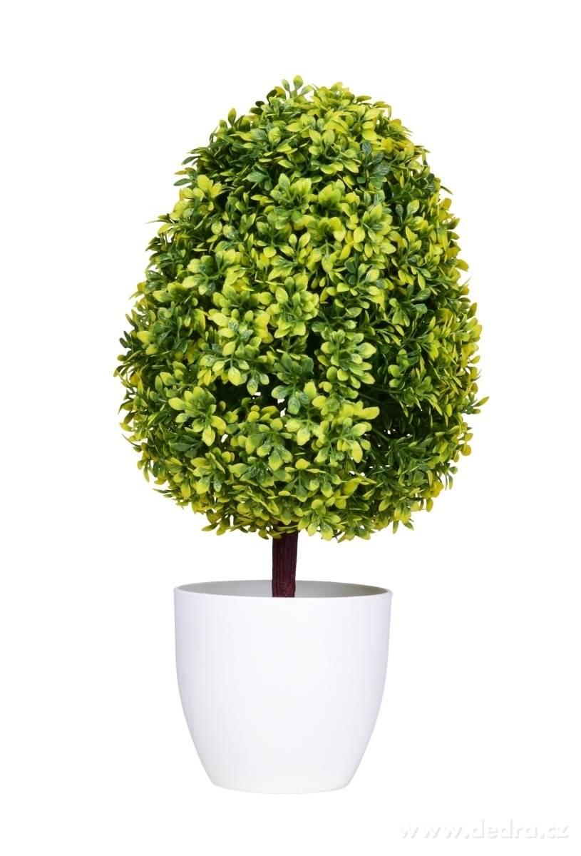 Dedra Buxus na kmínku ateliérový stromek
